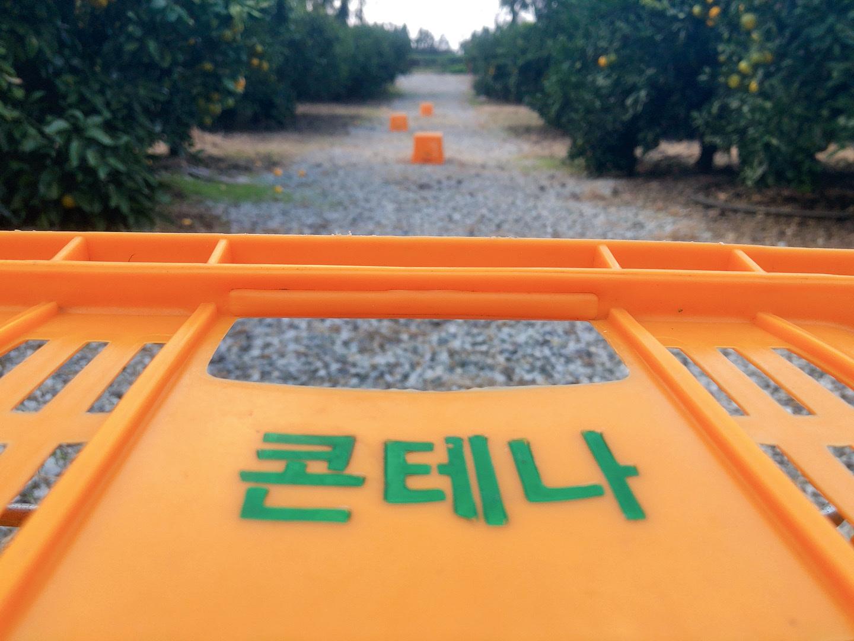濟州島咖啡廳 濟州島橘子籃橘子果園區,圖片版權:stunning-asia.com