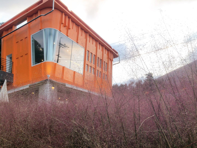 濟州島咖啡廳 濟州島橘子籃咖啡店粉黛亂子草+巨大橘子籃,圖片版權:stunning-asia.com