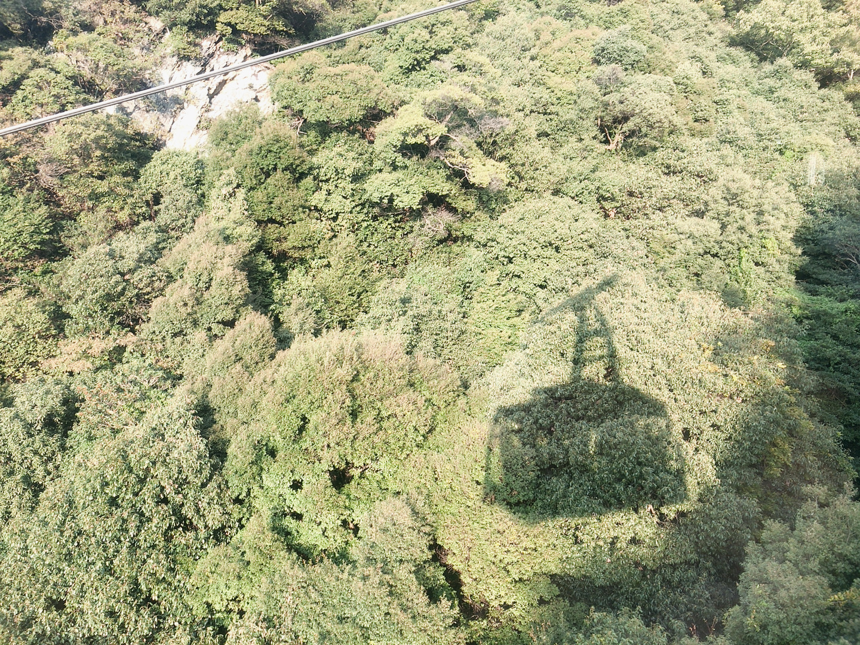 岐阜城 金華山纜車樹林